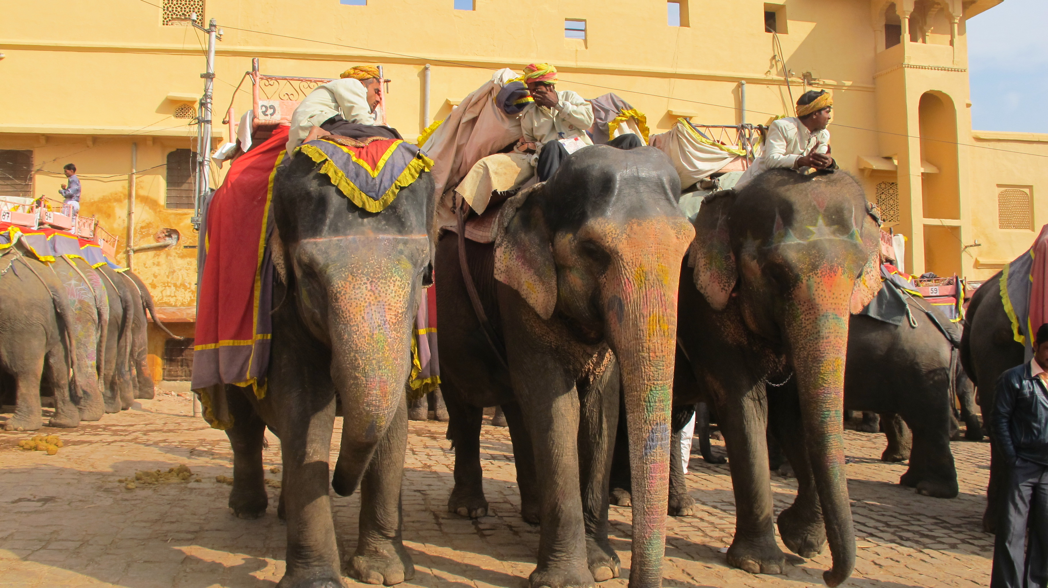 Elephants decorated for rides to Amber Fort